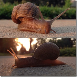Snail Portraits With The Best Camera In The World